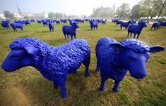 Sculptures of blue sheep flock in Schwerin, Germany. The ovine art -- works in plastic by German artists Rainer Bonk and Bertamaria Reetz -- has been traveling around Europe for three years. One sheep remains as an ambassador at each stop on the tour. (Photo by Jens Buttner/AFP)/GettyImages.