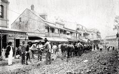 Ploughing George Street towards Roma Street, 1890s:Chamberlain and Wyllie tendered to put down wooden blocking for the length of Queen Street and George Street from Queen to Roma Streets. The contract was too big for them and George Charles Willcocks took over. Two plough teams were used each operating 12 powerful horses. Four drivers were required and three men to hold and guide the plough