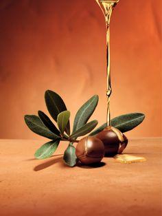 L'Argan est un arbre rare et précieux qui pousse le long de la côte au sud d'Essaouïra. Ultra-résistant aux conditions climatiques les plus arides, ses noyaux contiennent un véritable trésor: l'huile d'Argan,