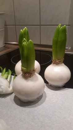 DIY – Frühblüher in Wachs Early bloomers in wax Some people have already spotted the amaryllis in wax in winter. The idea: no watering Difficulty: easy Diy 2019, Diy And Crafts, Crafts For Kids, Christmas Crafts, Christmas Decorations, Flower Decorations, Idee Diy, Winter Wonder, Decoration Table