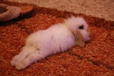 it's a cuddly bunny. Warm, fuzzy, and kind.