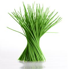 ciboulette cultivo.a1 Ciboulette cultivado en casa: consejos de utilidad huerta aromaticas