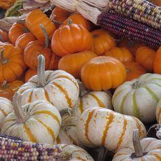 #Fall #Minnesota @mplsfarmmarket