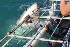Top 21 Cape Town nature and wildlife attractions including safari, hiking, biking, Table Mountain and ocean activities. Plan your Cape Town activities! Great White Shark Diving, Shark Cage, Best Tourist Destinations, V&a Waterfront, Ocean Activities, Wildlife Safari, Great Pic, African Safari