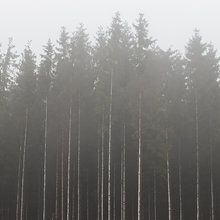 Fototapet - Misty Day in the Forest