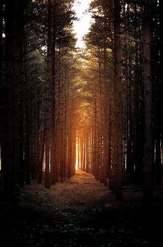 Horsford woods by Matthew Dartford.