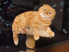 街の灯りと食い意地と・・・の画像   マロンの物語 feat.猫カフェ Cats
