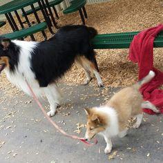 Walking the dog?