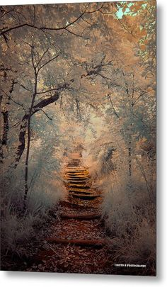 New landscape photography forest pathways ideas Beautiful World, Beautiful Places, Beautiful Forest, Beautiful Scenery, Amazing Places, Natural Scenery, Landscape Photography, Nature Photography, Photography Composition