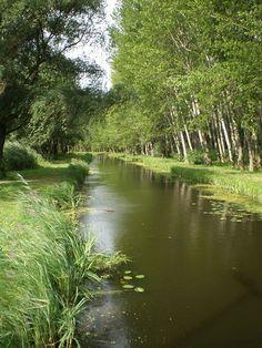 Szigetköz- Győrladamér közelében Heaven On Earth, Homeland, Budapest, Serenity, Hiking, Country Roads, River, Travelling, Places