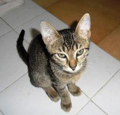 Tery geboren augustus 2014 is gevonden op straat, mager, hongerig, vol vlooien en miauwend om aandacht en voedsel. Tery is een vriendelijke poes die goed met andere katten kan. Hij was snel gewend in huis en houdt er van om te spelen naar hartelust. Hij is zeer sociaal naar mensen en wordt graag door mensen geaaid en geknuffeld. Tery is gecastreerd.
