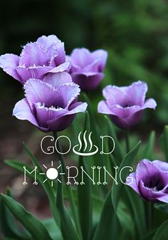 Good Morning My Love, Good Morning Quotes, Morning Board, Morning Images, Wallpaper, Flowers, Friends, Art, Good Morning Wishes