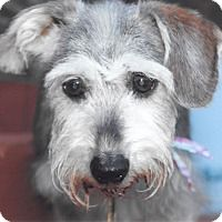 Adopt A Pet :: Mabel - Sharonville, OH