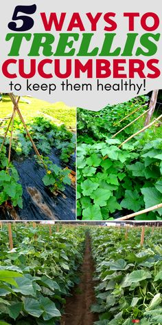 Cucumbers grow better and stay healthier when grown vertically. Here are 5 cucumber trellis ideas to help you grow your best cucumber ever! Cucumber Trellis, Vegetable Garden Design, Vegetable Gardening, Planting Vegetables, Growing Veggies, Garden Trellis, Potager Garden, Herbs Garden, Garden Types