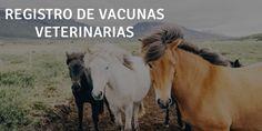 7. TODAS las vacunas de uso animal antes de ser comercializadas requieren de un permiso conocido como REGISTRO o LICENCIA. Cada país cuenta con una autoridad sanitaria responsable de entregar esta autorización; SAG en Chile, USDA en Estados Unidos, EMEA en la Unión Europea, entre otras.