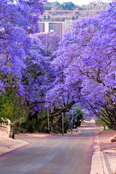 Wonderful Useful Tips: Princess Canopy Awesome tree canopy year old.Tree Canopy Year Old. Patio Canopy, Tree Canopy, Canopy Outdoor, Hotel Canopy, Canopy Lights, Canopy Tent, Wedding Canopy, Unique Trees, Pretoria