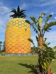 The Big Pineapple, near Bathurst in the Sunshine Coast, Eastern Cape, South Africa. Big Pineapple, Port Elizabeth, Most Beautiful Cities, Places Of Interest, Travel Planner, Fast Cars, Trip Planning, South Africa, Challenges