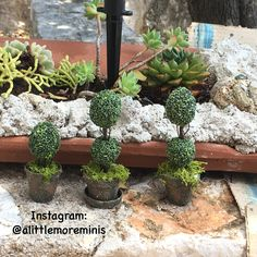Boxwood Topiary for my Fairy Treehouse 🌳🧚🏻♀️ My Boxwood Topiary for my Fairy Treehouse  Instagram: @alittlemoreminis #alittlemoreminis #boxwood #fairygarden #miniature #dollhouseminiature #dollhouse #miniaturegarden Balcony Design, Garden Design, Dubai Miracle Garden, Fairy Garden Houses, Fairy Gardens, Garden Storage Shed, Boxwood Topiary, Fairy Furniture, Covent Garden
