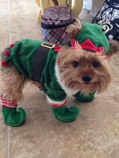 A community of Yorkshire Terrier lovers!