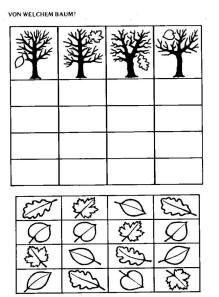 hang het juiste blaadje bij de juiste boom
