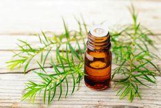 L'incontournable huile essentielle d'arbre à thé – Emmanuelle Grenon Naturopathe