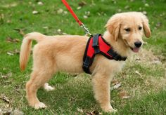 Dog-Wild Sporty Mesh Harness-Red