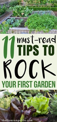 Are you a vegetable gardening beginner? Read these tips from a pro that will help you plant your best backyard garden ever! garden types Gardening for Beginners: 11 Tips for a Successful Start Vegetable Garden Planner, Vegetable Garden For Beginners, Gardening For Beginners, Vegetable Gardening, Flower Gardening, Planting A Garden, Starting A Vegetable Garden, Garden Types, Garden Care