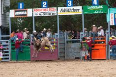 Rodeo, Far North Queensland, Outback, yourtrails.com.au