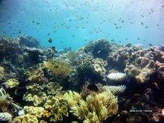 great barrier reef near michealmas cay.  #australia #queensland #cairns #greatbarrierreef #reef #wildlife #coral #travel by submontaneturtle http://ift.tt/1UokkV2