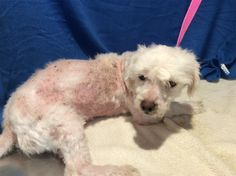 4/1/17-Inland Valley Humane Society One Year Old Terrier Mix Boy. ID # I1269085