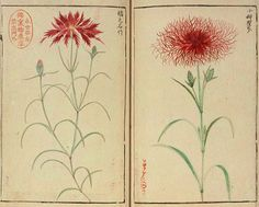 National Diet Library in Japan - Fauna and Flora in Illustrations - Natural History of the Edo Era exhibition online.