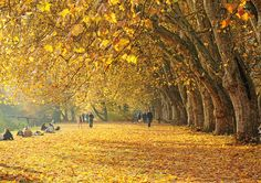 is it wrong that even though summer has just begun, i am already lusting after fall and the gorgeous change of color?
