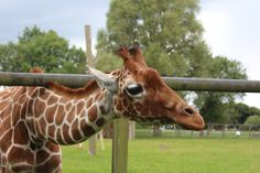 Whipsnade Week One Round Up! - Travels of a Baby Vet