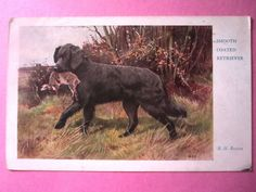 Good Dog. The Medici Society. Smooth Coated Retriever. R. H. Buxton. Posted 1937