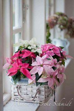 Arrannjo floral natalino