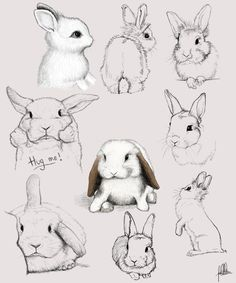 Des lapins. (A study in bunnies - our kind of study!) (http://www.madmoizelle.com/tuto-tricot-debutant-chale-261855)