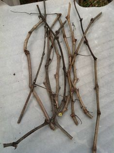 New grapevines can be propagated from the cuttings pruned from your grapevines.  Since grapevines must be pruned every year, this gives you the opportunity to plant more and more grapevines every y…