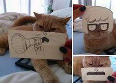 Resultado de imagem para banheiro reservado gatos
