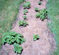 Pestovateľské triky o ktorých ste možno nikdy nepočuli - Pestovanie - Záhrada a príroda | Hobby portál