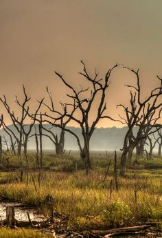 ✮ Dead Forest Marsh - South Carolina