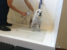Day 21: Your pet's bath time - Tessa enjoying a bath at #hvc #30dayphotochallenge #keeppetshealthy