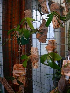 Points You Should Know Prior To Obtaining Bouquets Hanging Orchids Orchid Planters, Orchid Pot, Orchids Garden, Garden Plants, Cool Plants, Air Plants, Indoor Plants, Hanging Orchid, Hanging Plants