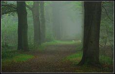 Venturing into a misty wood by jchanders on deviantART