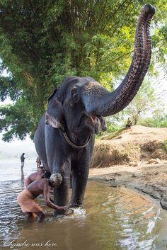 Beauty of Kerala, So nice amazing lovable creatures of the world Elephants