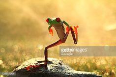 Stock Photo : Indonesia, Riau Islands, Batam City, Dancing frog