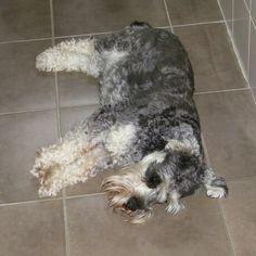 My beloved little Doogie. Animals, Animales, Animaux, Animal, Animais