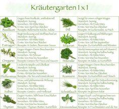 Kräutergarten 1 x 1
