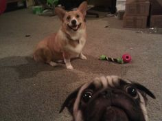 """The Internet is filled to the brim with cute puppy photos sweet enough to make your heart explode. But that doesn't mean every snapshot of a dog deserves an """"aww.""""  Dogs can be unaware of what's going on around them, resulting in a ruined holiday family Kodak moment.   www.petnook.in"""