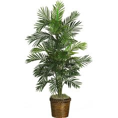 Silk Areca Palm Tree