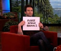 Awwww Adam Levine (Maroon 5) asks us all to: Please Rescue Animals - well said! THIS IS THE REASON Y I LOVE ADAM!!!!!!!